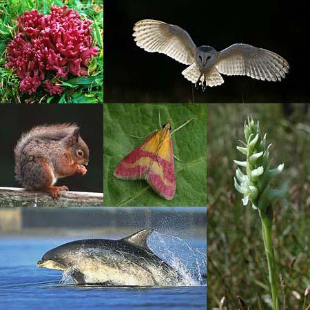 Northern ireland biodiversity strategy 2002