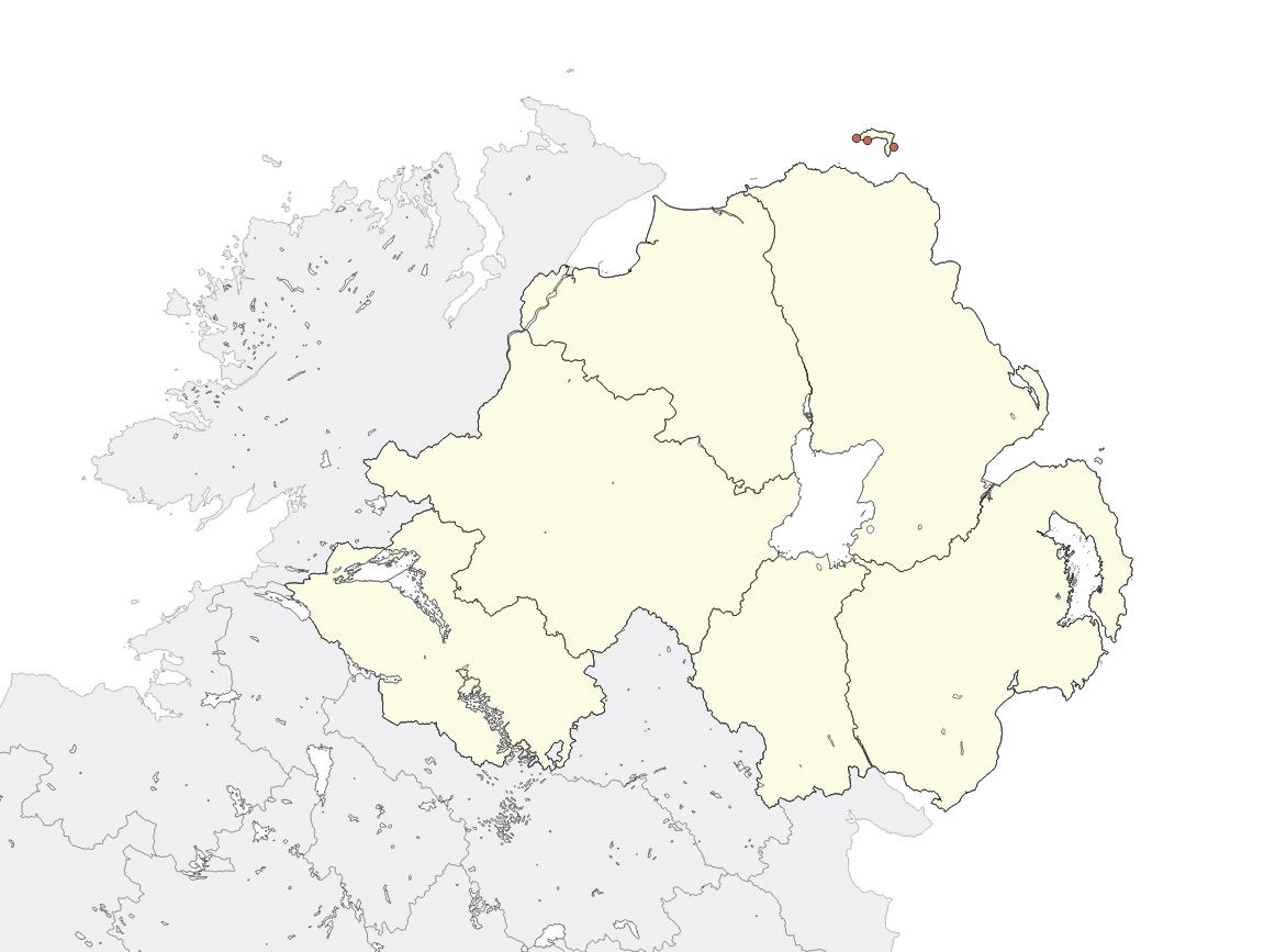 Erato Voluta Egg Cowrie Northern Irelands Priority